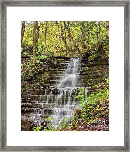 Forest Cascade Framed Print