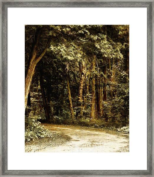 Forest Curve Framed Print