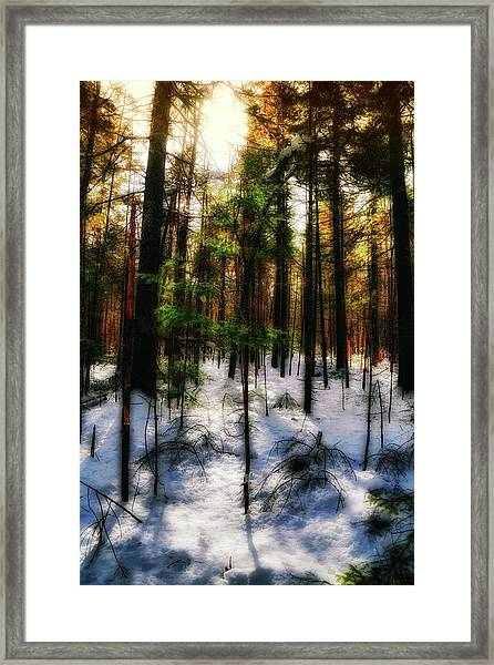 Forest Dawn Framed Print