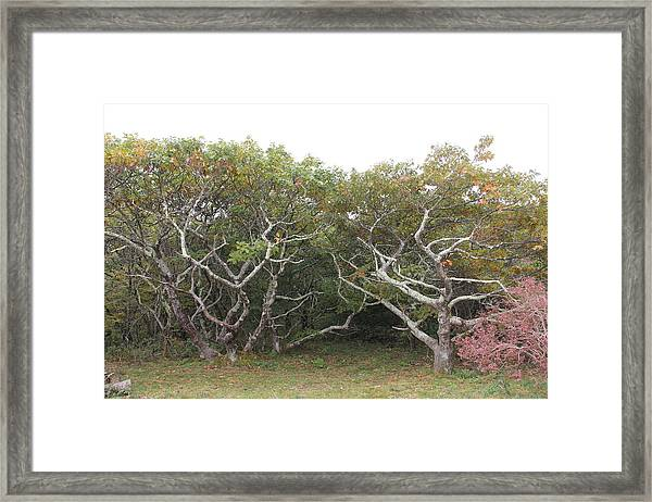 Forest Entry Framed Print