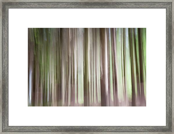 Forest Fantasy 3 Framed Print