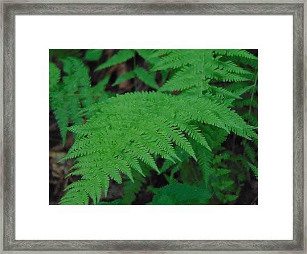 Forest Fern Framed Print