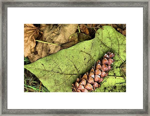 Forest Floor Still Life Framed Print