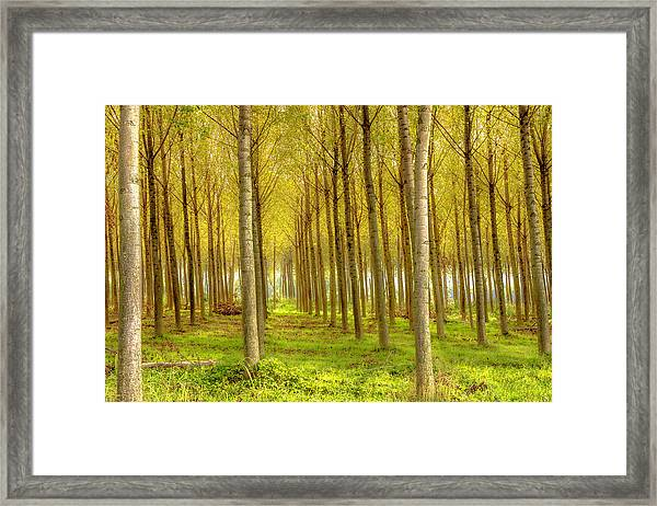 Forest In Autumn Framed Print