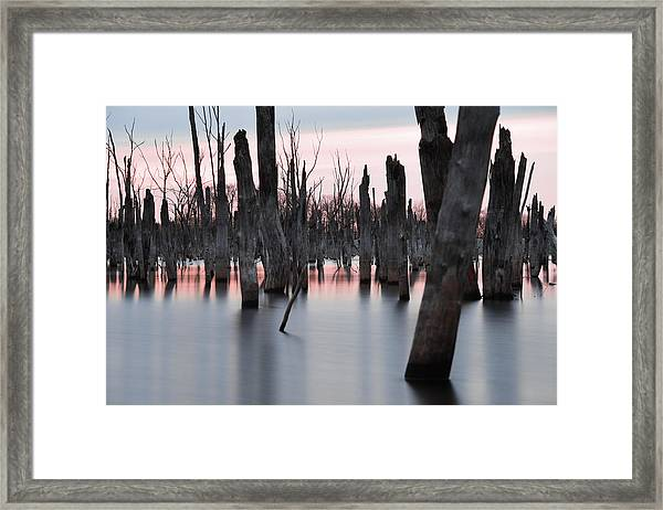 Forest In The Water Framed Print