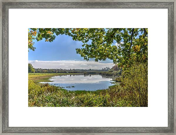 Forest Lake Through The Trees Framed Print