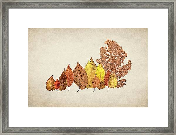 Forest Of Autumn Leaves II Framed Print