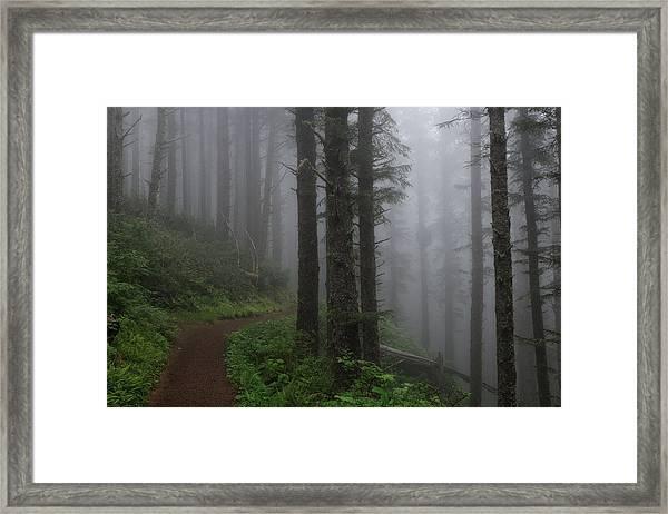 Forest Of Fog Framed Print