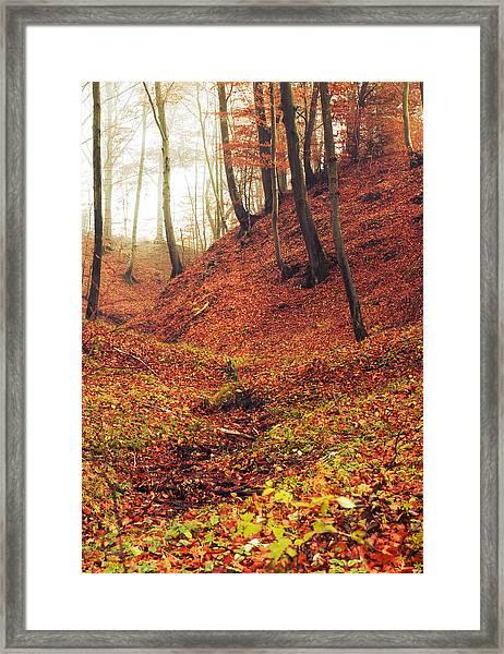 Forest Of November Framed Print