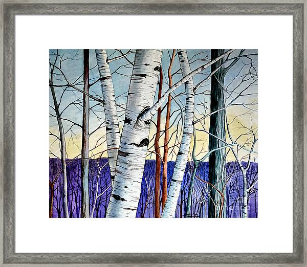Forest Of Trees Framed Print