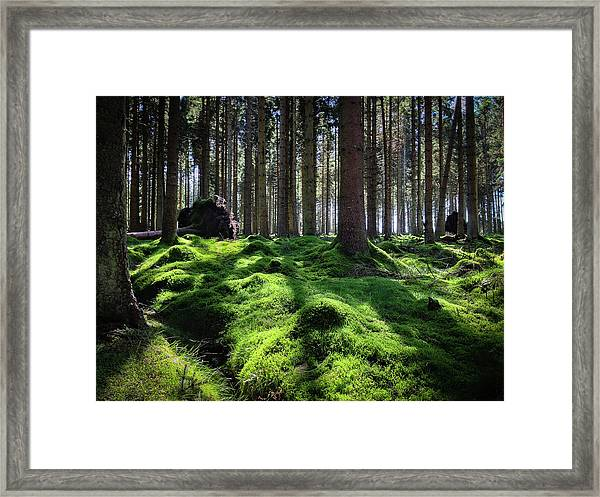 Forest Of Verdacy Framed Print
