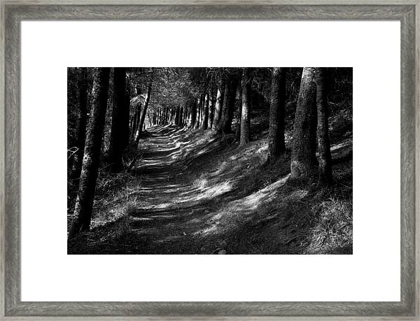 Forest Path Framed Print