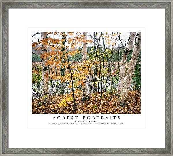 Forest Portraits Framed Print by Steven Tryon