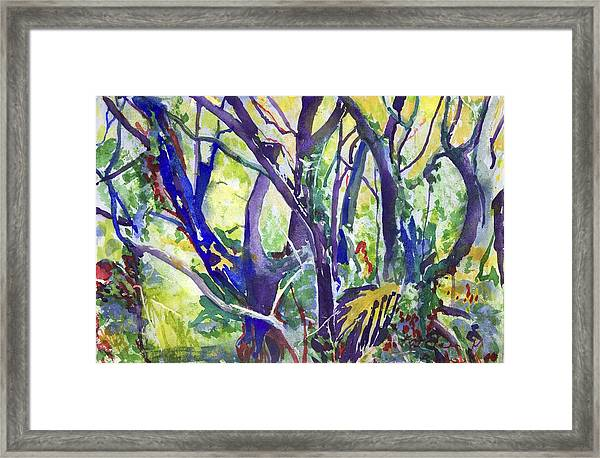 Forest Rainbow Framed Print