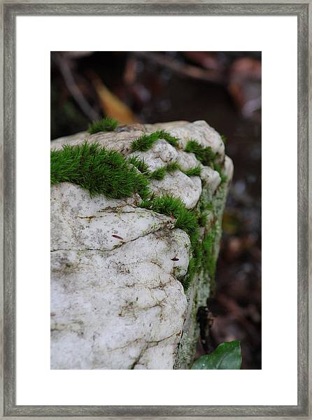 Forest Rock With Moss Framed Print by Pamela Smith