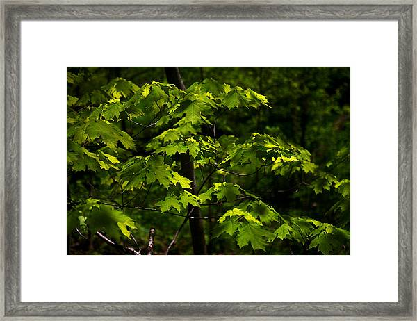 Forest Shades Framed Print