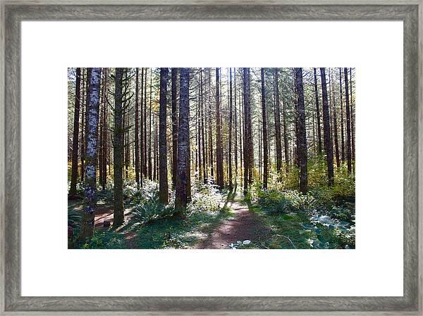 Forest Stroll Framed Print