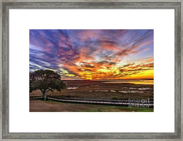 Enlightened Tree Framed Print