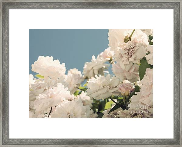 Fountains Of Roses Framed Print