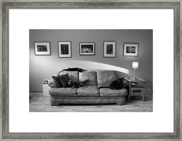 Four Cats Framed Print