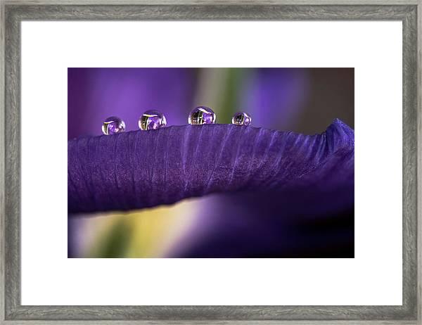 Four Drops Framed Print