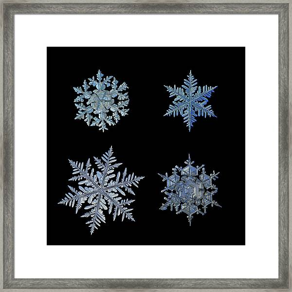 Four Snowflakes On Black Background Framed Print