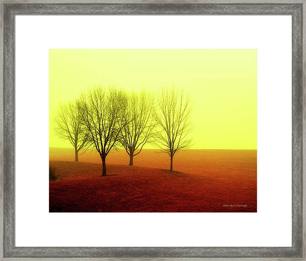 Four Trees Framed Print