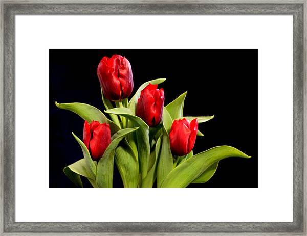 Four Tulips Framed Print