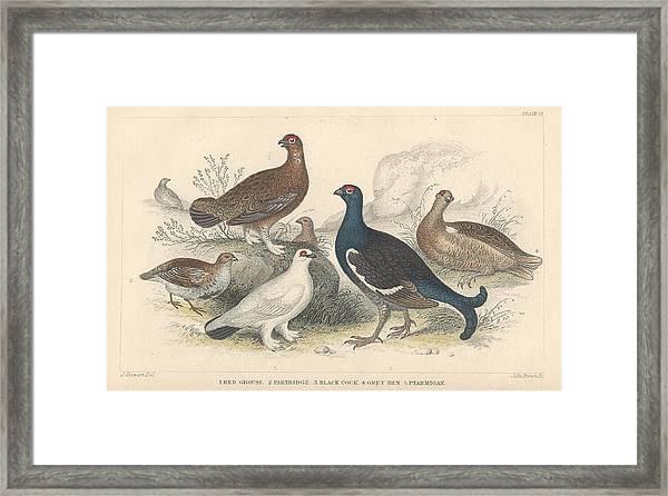 Fowl Framed Print