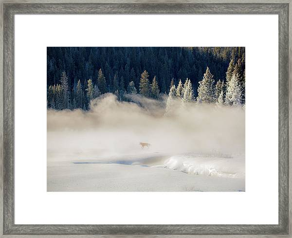 Fox In The Mist // Yellowstone National Park  Framed Print