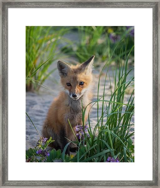 Fox Kit Framed Print