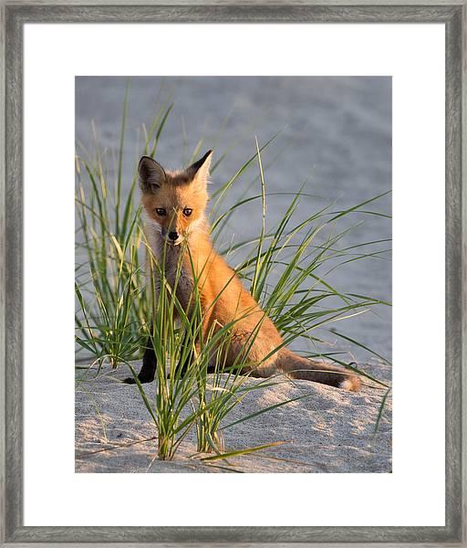 Fox Kit Portrait Framed Print