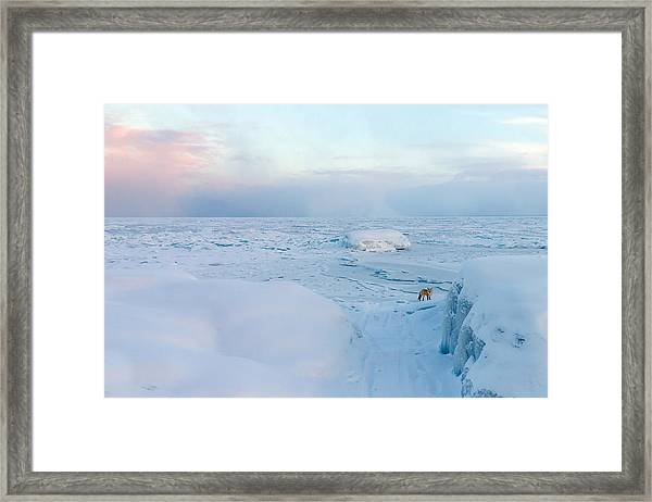 Fox Of The North I Framed Print