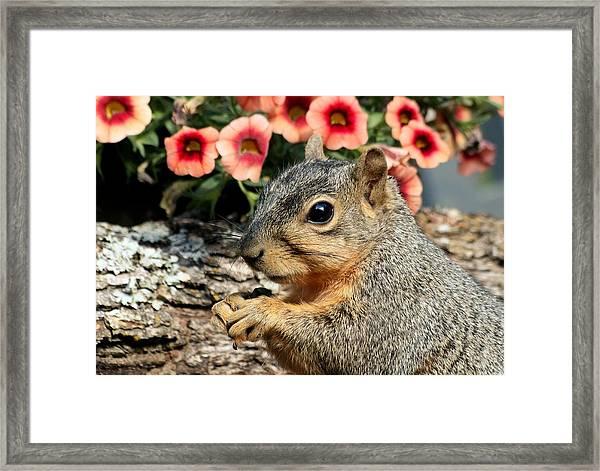 Fox Squirrel Portrait Framed Print