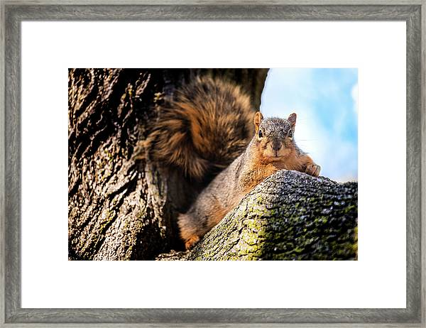Fox Squirrel Watching Me Framed Print