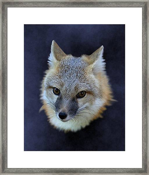 Foxburst Framed Print