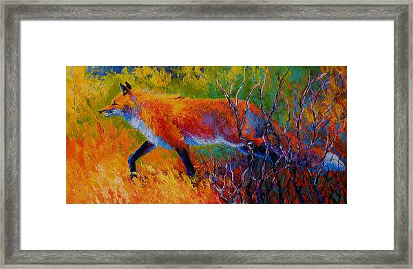 Foxy - Red Fox Framed Print