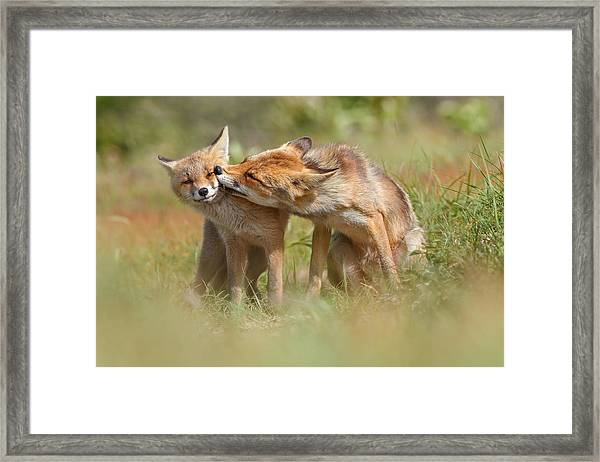 Foxy Love Series - But Mo-om II Framed Print