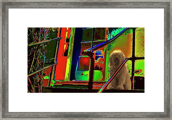 Foxy Roxy Framed Print