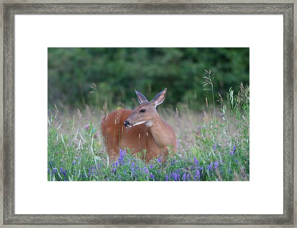Framed By Flowers Framed Print