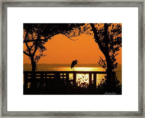 Framed Great White Egret Framed Print