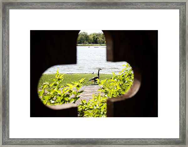 Framed Nature Framed Print