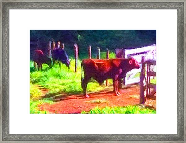 Franca Cattle 2 Framed Print