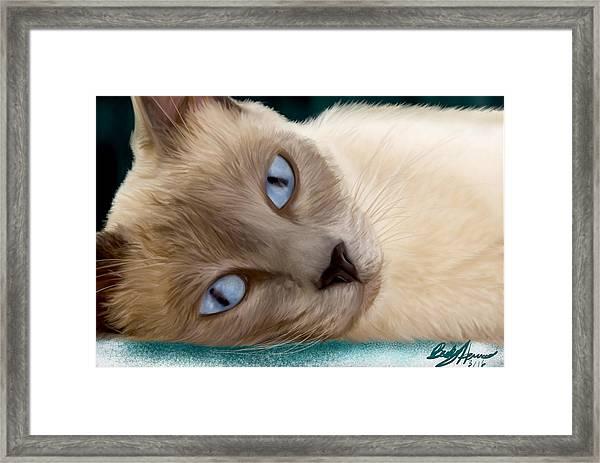 Frankie Blue Eyes Framed Print
