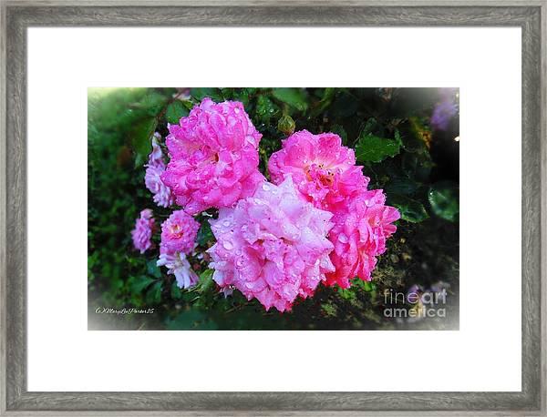 Frank's Roses Framed Print
