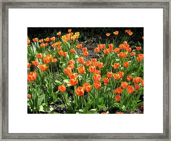 Framed Print featuring the pyrography Fred's Garden by Michael Lucarelli