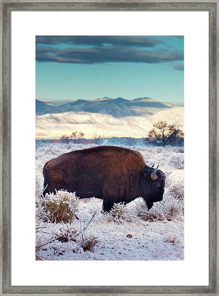 Framed Print featuring the photograph Free To Roam by John De Bord