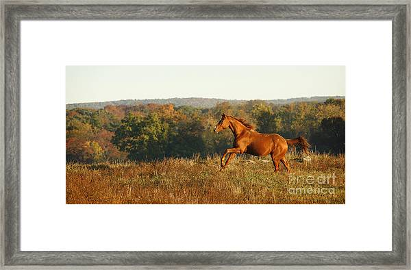 Freedom In The Late Afternoon Framed Print