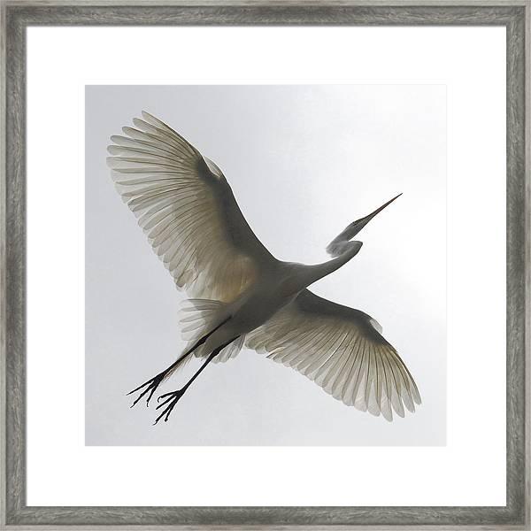 Freedom Of Flight Framed Print