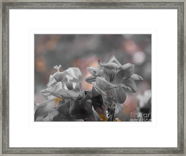 Freesia'a Without Colour Framed Print